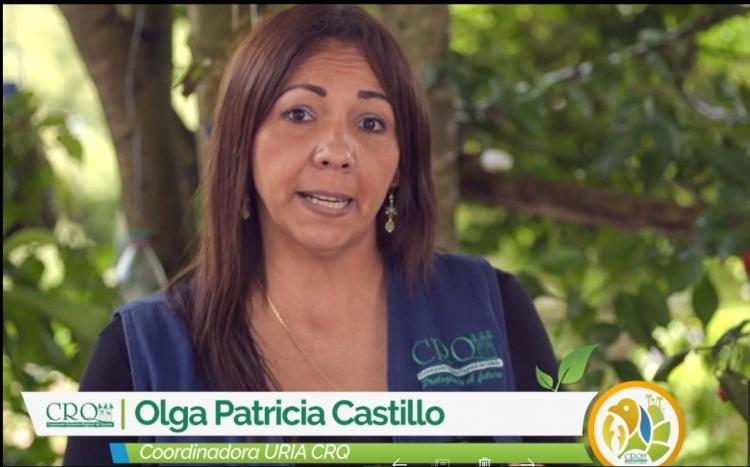 A Proceso Sancionatorio Tala De Guadual Que Se Efectuó En Un Predio Del Corregimiento De Barragán En Pijao.
