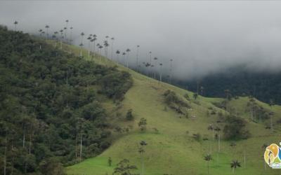 """""""Autoridad ambiental seguirá aportando su conocimiento técnico para definir capacidad de carga para Cocora"""": director general de la CRQ."""