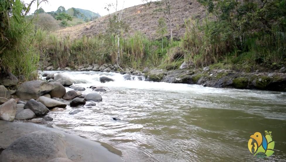 532 estrategias de conservación se realizan en áreas protegidas del Quindío.