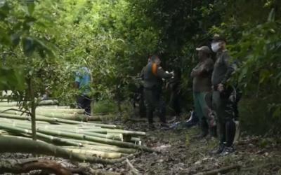 En el primer semestre de este año hemos resuelto 29 procesos sancionatorios relacionados con aprovechamiento forestal…